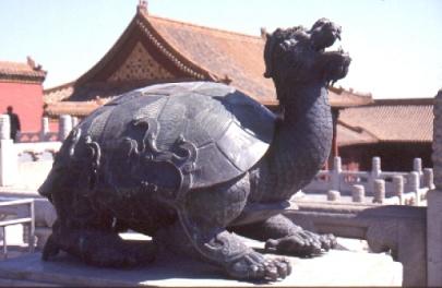 Schaut Euch diese Schildkröte an!
