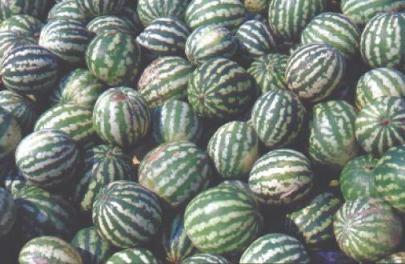 Ich liebe Melonen!