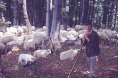 Das sind glückliche Schafe!